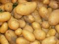 Giornata divulgativa Patata (BO)